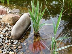 Укрепление берегов пруда: способы укрепления водоема в саду