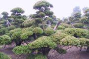 Декоративные кустарники и деревья: фото, названия