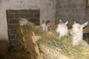Сарай для животных – нюансы планирования