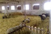 Как построить сарай для овец своими руками – разводим животных