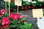 Рассада: хранение растений в контейнерах и меристемных растений
