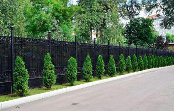Как украсить территорию вдоль забора, что посадить